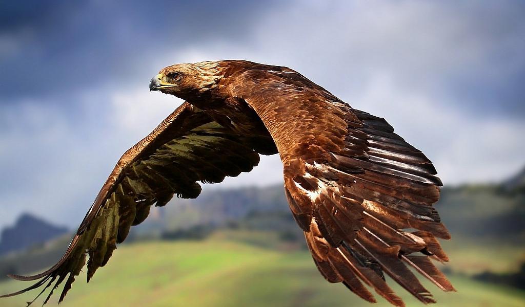 Право на Крылья