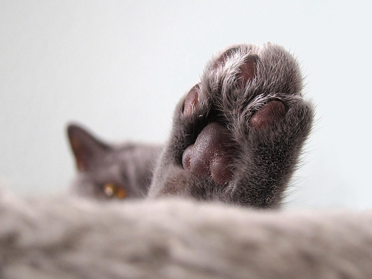 Защо котките обичат да спят?