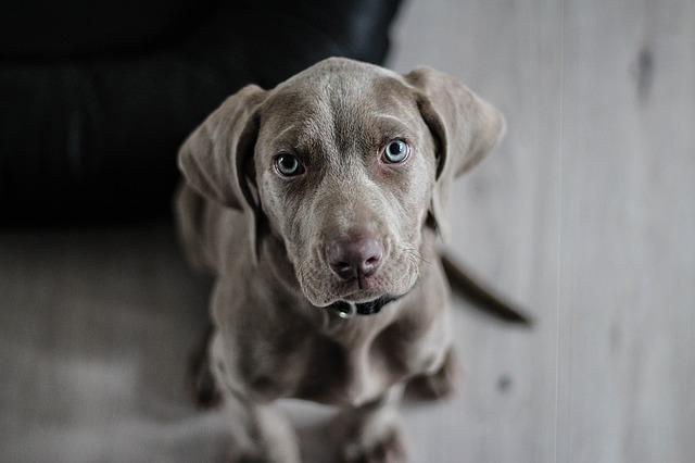 Кучето - най-добрият приятел на човека